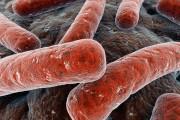 کوتاه و مختصر در مورد توبرکلوزیس
