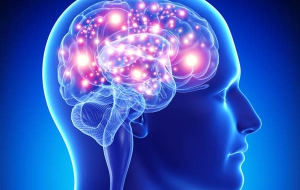 حقایقی در مورد مغز که به یادگیری بهتر شما کمک می کند