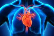 بررسی تاثیر فعالیت تنفسی بر بازگشت وریدی قلب